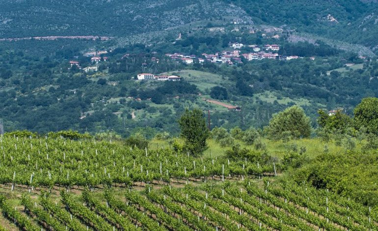 Wines of Goumenissa gaining recognition in the USA Wines from Goumenissa and Paiko Slopes developing awareness in the USA, through targeted presentations to professionals